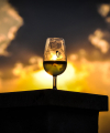 foto-nature-priroda-wine-sun-slunce-radekzdrazil-2019-03