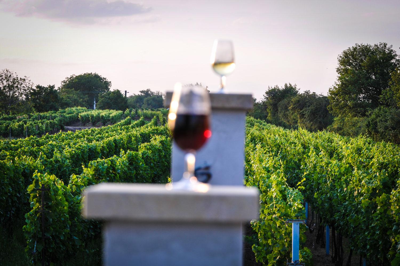 foto-nature-priroda-wine-sun-slunce-radekzdrazil-2019-05
