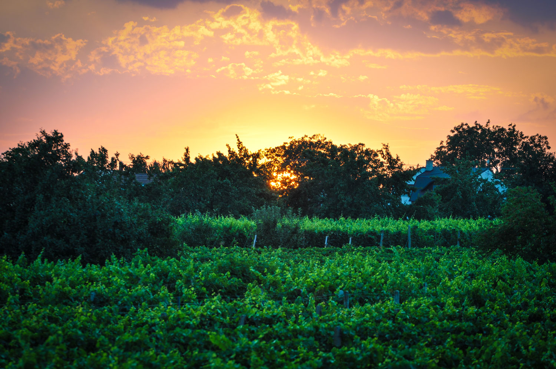 foto-nature-priroda-wine-sun-slunce-radekzdrazil-2019-05a