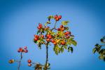 fotky-podzim-sipky-priroda-ptaci-03