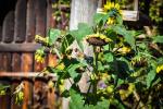 fotky-podzim-sipky-priroda-ptaci-04