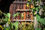 fotky-podzim-sipky-priroda-ptaci-05