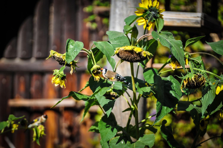 fotky-podzim-sipky-priroda-ptaci-06