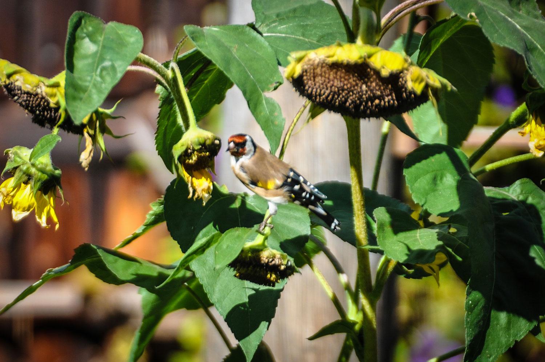 fotky-podzim-sipky-priroda-ptaci-07