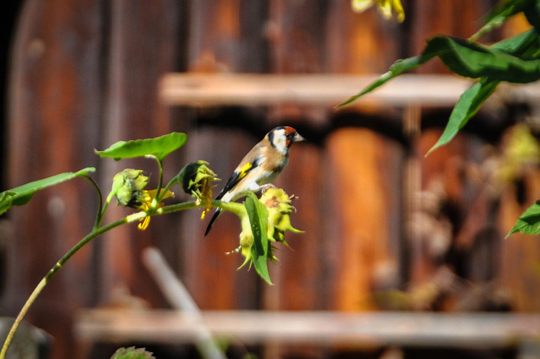 fotky-podzim-sipky-priroda-ptaci-08