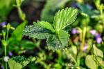 foto-priroda-rano-rosa-web-20180427-08