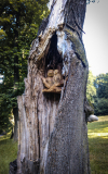 drevorezba-carving-wood-drevo-sovy-obora-hukvaldy-radekzdrazil-03