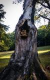drevorezba-carving-wood-drevo-sovy-obora-hukvaldy-radekzdrazil-05