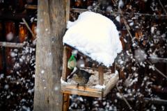 foto-nature-birds-2019-02a