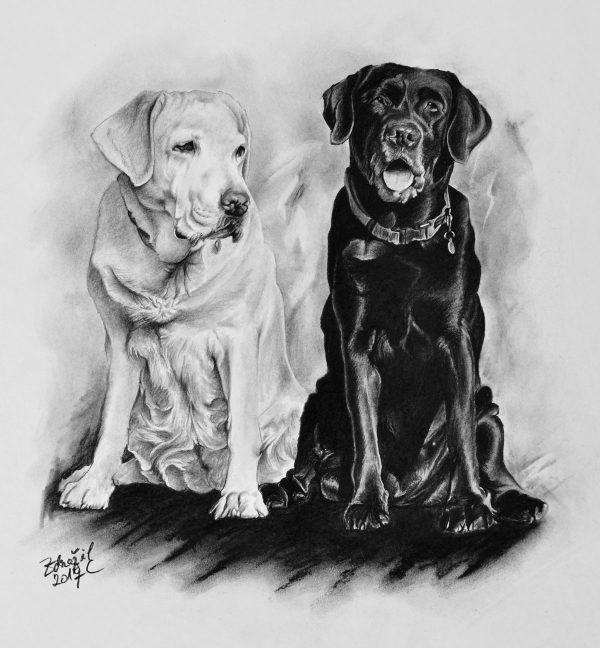 Kresba labradorů