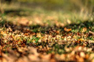 Podzim v oboře - Hukvaldy