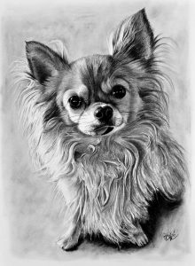 Kresba psíka
